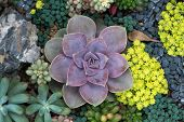 picture of horticulture  - Miniature succulent plants - JPG
