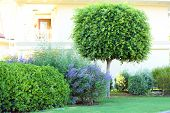 stock photo of tree trim  - Beautiful tree and bushes at park - JPG