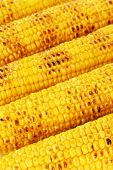 image of corn cob close-up  - Delicious golden grilled corn close - JPG