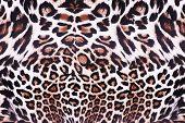 image of wildcat  - Texture of leopard skin seamless background - JPG