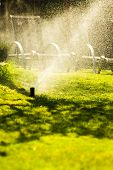 stock photo of sprinkler  - Gardening - JPG
