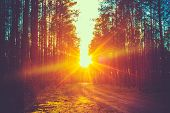 stock photo of sunrise  - Forest Road Under Sunset Sunbeams - JPG