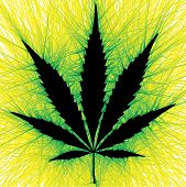 picture of rastaman  - a vector illustration in the form of marijuana - JPG