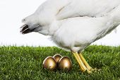 pic of egg-laying  - Hen laying three golden eggs in green field - JPG