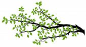 pic of tree leaves  - Tree branch with green leaves over white background - JPG
