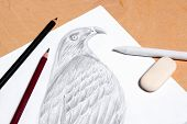 pic of hawk  - Graphite pencil eraser and stamp with drawing hawk on the wooden background - JPG