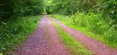 foto of dirt road  - A dirt road in the mixed forest by Beckingen Saarland  - JPG