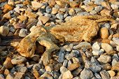 picture of corpses  - Corpses of cat when dry on the stone - JPG