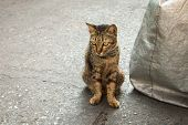 picture of scared baby  - Homeless old cat face look like a baby tiger - JPG