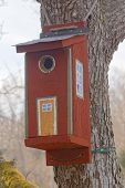 stock photo of tree house  - Bird house in a tree painted as a traditional country house - JPG