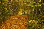 image of serbia  - A lot of fallen leaves along forest mountain road at autumn - JPG