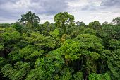 picture of rainforest  - Amazon rainforest in the Tambopata reserve - JPG