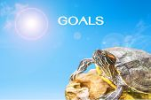 picture of craw  - metaphor of goals with turtle and sun background. ** Note: Shallow depth of field - JPG