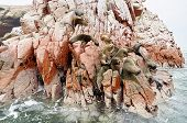 picture of sea lion  - sea lion on rocke formation looking at the camera - JPG
