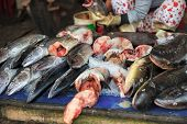 foto of stall  - Traditional asian market stall full of fresh fish - JPG