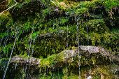 foto of water jet  - Moss on the rock with water jets - JPG