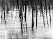 stock photo of impressionist  - Forest - abstract impressionist blurry background, created using panning technique. Landscape orientation, black and white. ** Note: Visible grain at 100%, best at smaller sizes - JPG