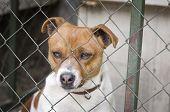 stock photo of sad dog  - Close up of sad dog behind wire mesh - JPG