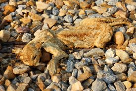 stock photo of corpses  - Corpses of cat when dry on the stone - JPG