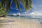 Постер, плакат: тропический пляж с пальмами