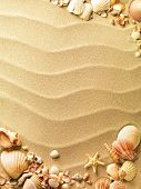 image of shells  - sea shells with sand as background - JPG