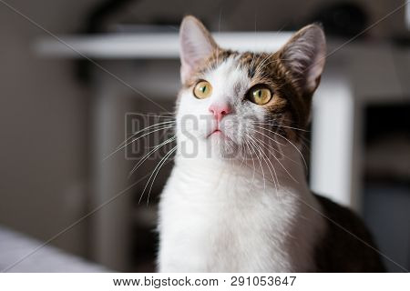 poster of A Cat Looking Up, Animal Portrait, Home Interior Concept