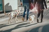 Couple Walking With Two Dogs On The Street. Sun Glare Effect poster