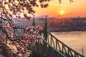 Beautiful Liberty Bridge At Sunrise With Cherry Blossom In Budapest, Hungary. Spring Has Arrived To  poster