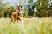 Beautiful Horse Is Eating Grass In The Field. poster