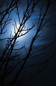 stock photo of freaky  - Full moon in foggy dark night naked leafless trees silhouettes and clouds halloween theme vertical background scary moonlight scenery vertical - JPG