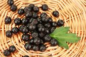 picture of chokeberry  - chokeberry with green leaf on wicker mat close - JPG