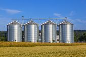 pic of silos  - four silver silos in corn field in harvest time - JPG