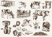 picture of milkmaid  - cow and milk products - JPG
