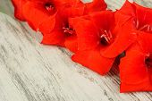 stock photo of gladiolus  - Beautiful gladiolus flower on wooden background - JPG