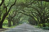 image of canopy  - Oak canopied South Boundary Street in Aiken South Carolina - JPG