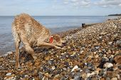 stock photo of herne bay beach  - Full length of mixed breed dog on pebble beach in Herne Bay - JPG