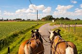 image of yoke  - Through the flemish fields with horse and covered wagon - JPG