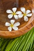 Three frangipani in wooden bowl of and green palm