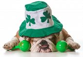 English bulldog wearing St Patrick's Day hat isolated on white background