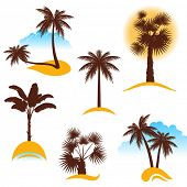 foto of washingtonia  - stylized palm trees - JPG
