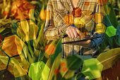 stock photo of genetic engineering  - GMO science in corn field - JPG