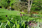 stock photo of grass-cutter  - garden spring tulip and woman cutting grass background  - JPG