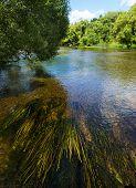 picture of green algae  - Green algae in fast flowing river  - JPG