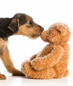 pic of teddy  - cute puppy reaching out to kiss stuffed teddy bear  - JPG