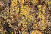 foto of lichenes  - Textured Stone Road with Lichens in the Wild - JPG