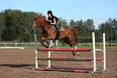 pic of breed horse  - Brunette woman show jumping on brown horse in summer - JPG