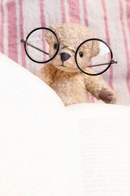 image of goodnight  - Teddy bear with huge vintage glasses reads a book in front of pink striped textile background  - JPG