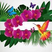 foto of jungle birds  - Floral design background - JPG