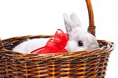 foto of white rabbit  - White rabbit with red ribbon in a basket isolated on white background - JPG