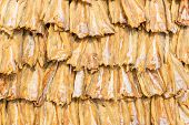 stock photo of ling  - Dried cobia fish in the sun  - JPG